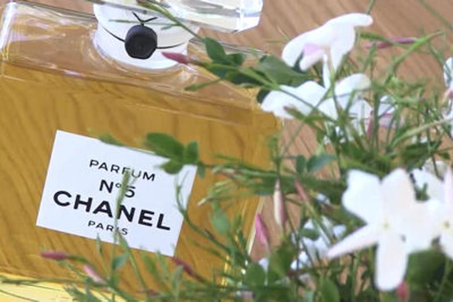 N°5Chanel: Au coeur de la cueillette du Jasmin de Grasse