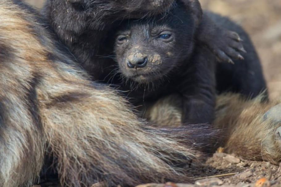 Le Zoo de Thoiry fête ses 50ans