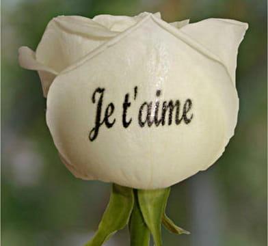 Votre déclaration d'amour écrite... sur une rose