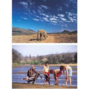 plongez au coeur de la savane africaine pour un safari inoubliable.