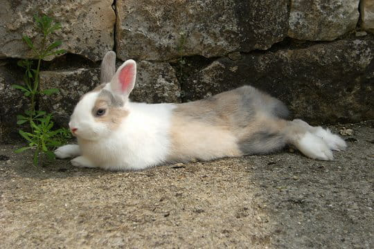 Biscotte, un lapin gourmand