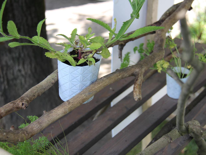 La pousse facile - Deco jardin journal des femmes toulouse ...