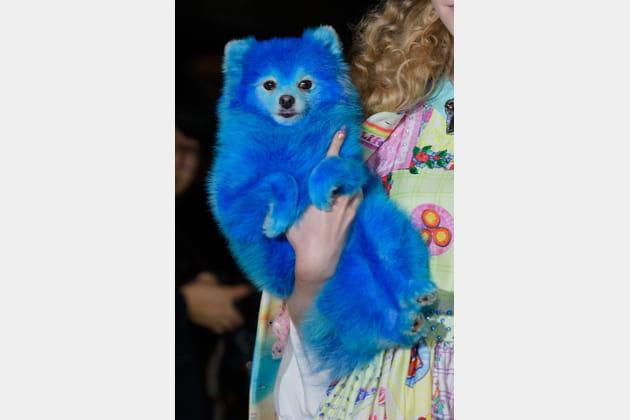 Le chien bleu du défilé Manish Arora
