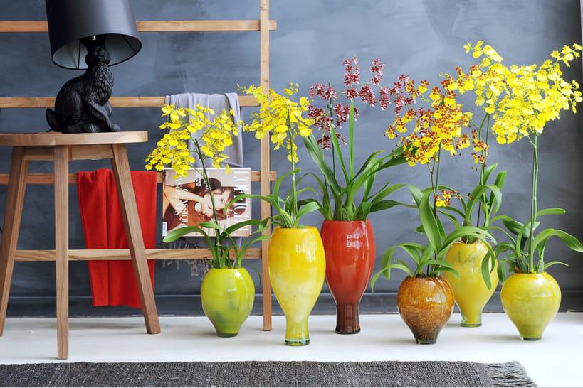 Des orchidées qui changent de la Phalaenopsis