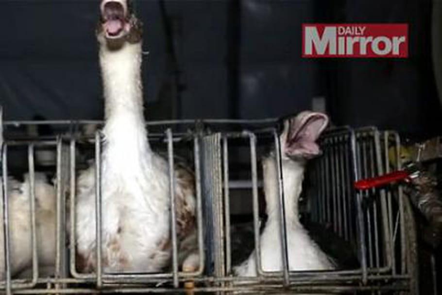 foie gras français polémique Grande Bretagne