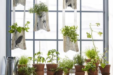 plante verte intrieur ikea awesome ikea plante grasse with plante verte intrieur ikea ikea. Black Bedroom Furniture Sets. Home Design Ideas