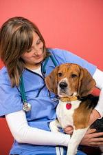 demandez conseil à votre vétérinaire sur le moyen d'identification le plus