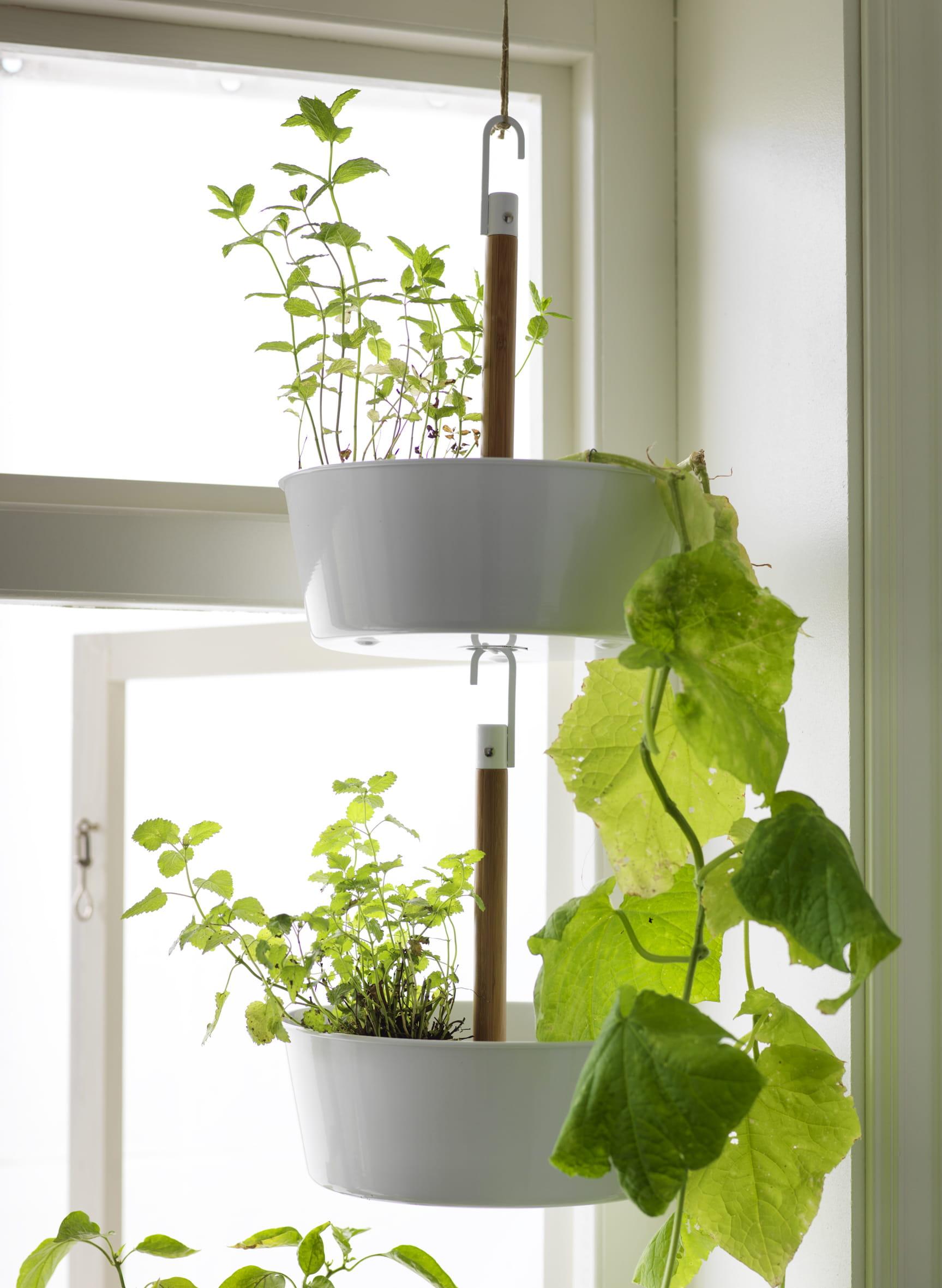 Plante D Int Rieur Ikea Fashion Designs