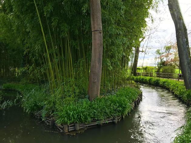 Massif de bambous
