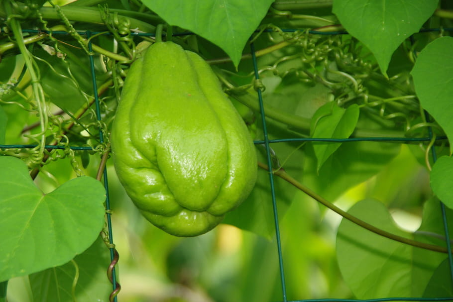 Les Legumes Oublies A Planter Au Potager