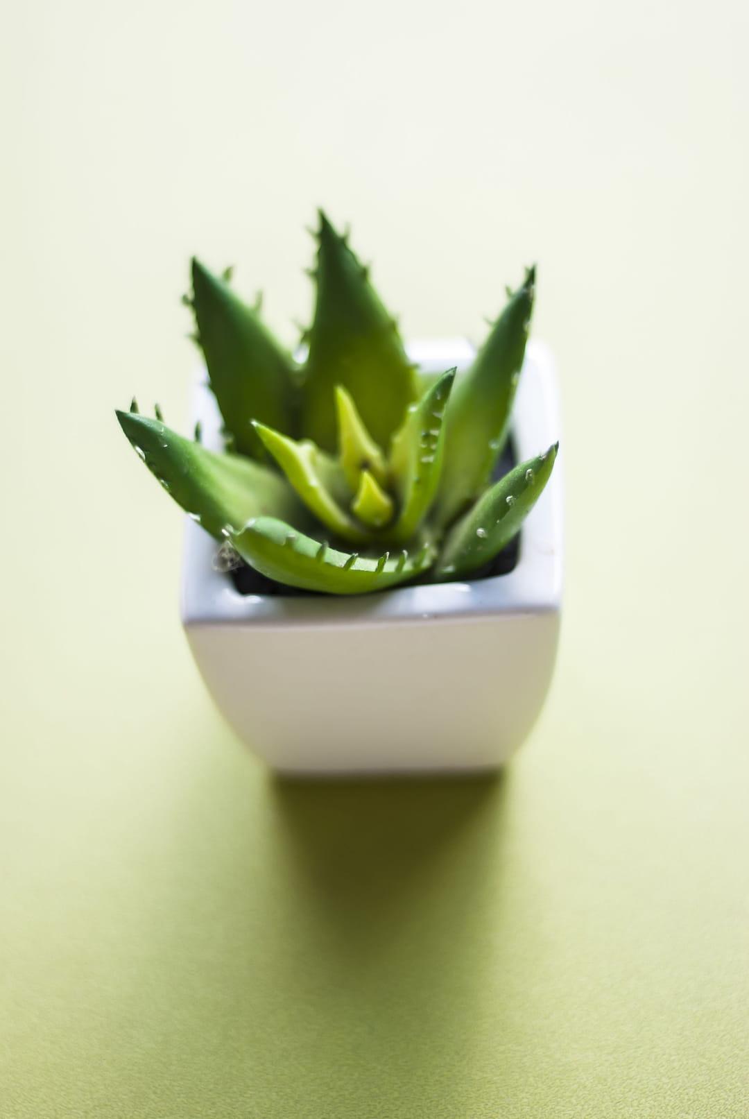 Ces plantes d 39 int rieur qui sont tendance - Fougere de boston depolluante ...