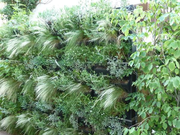 mur-vegetalise-avec-graminees