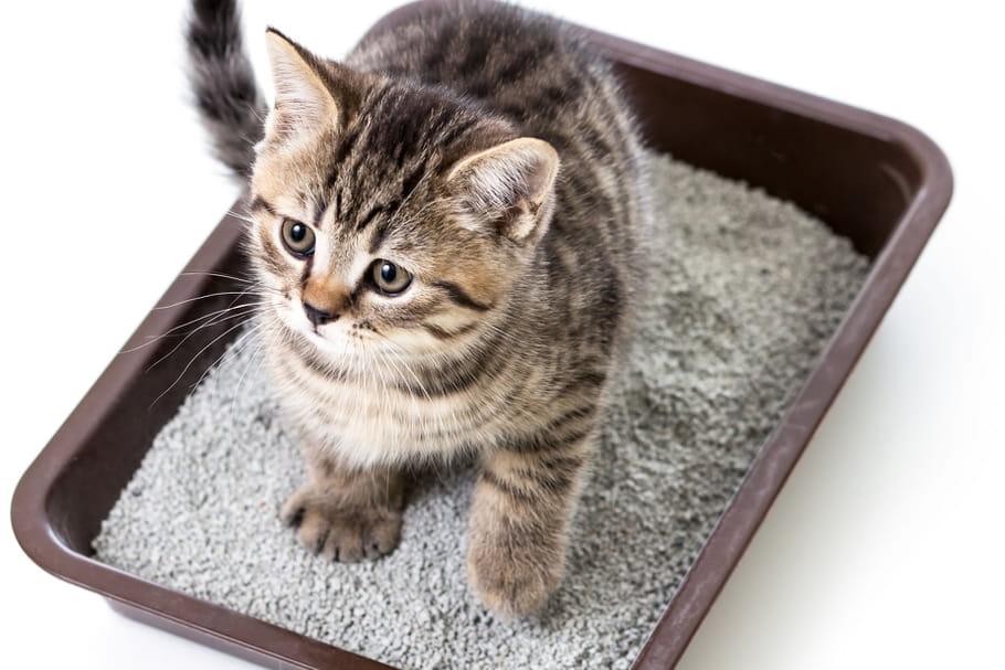 litière pour chat : les meilleurs produits du moment