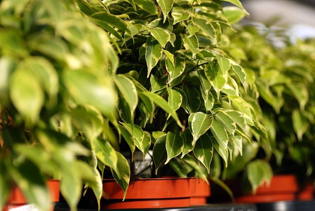 plante grasse increvable