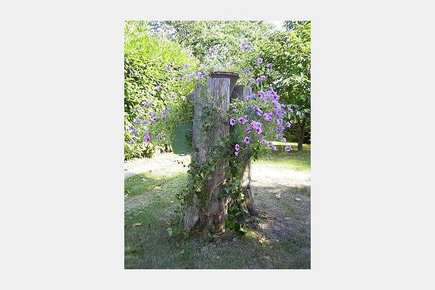Un tronc pour des fleurs