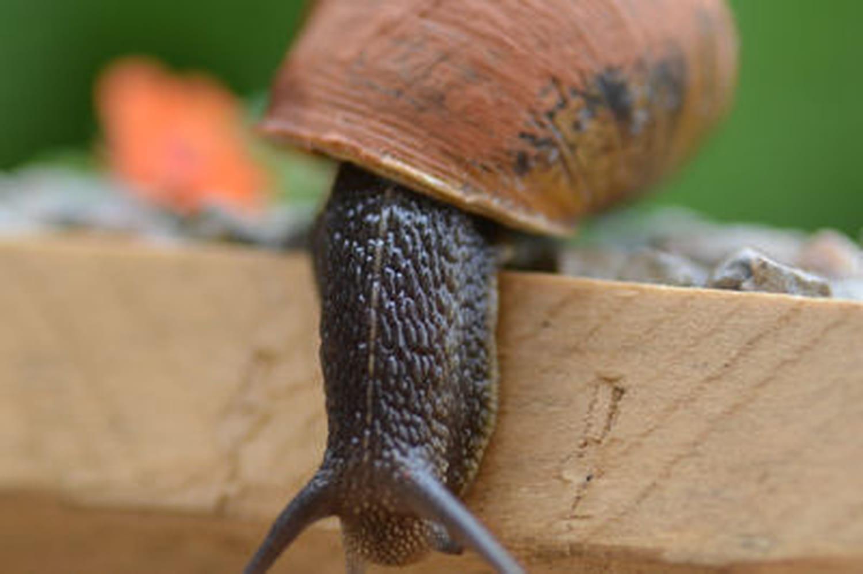 Opération escargot, un atelier jardinage inédit à Angers