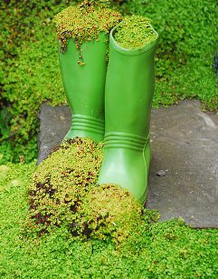 De vieilles bottes irlandaises