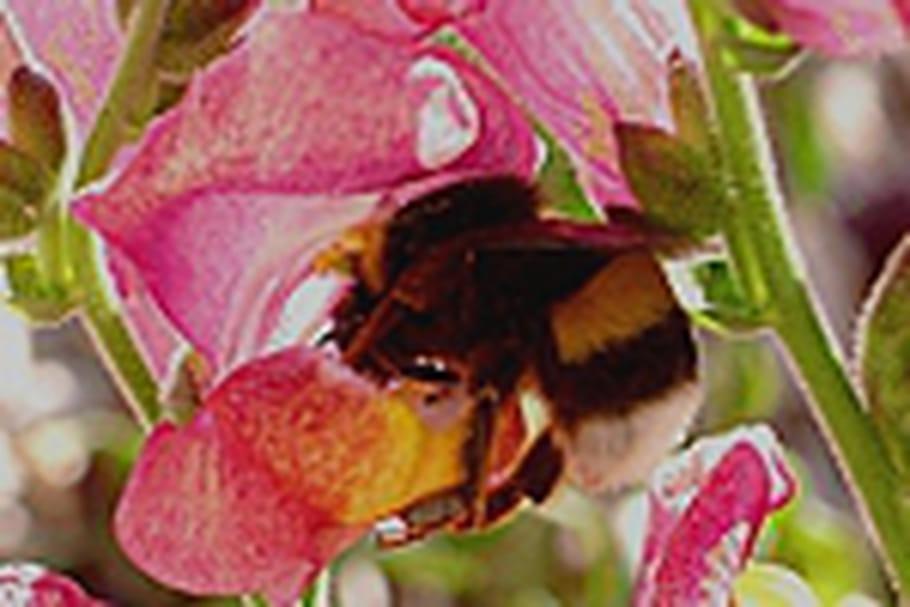 Attirez des pollinisateurs grâce à la couleur de vos fleurs