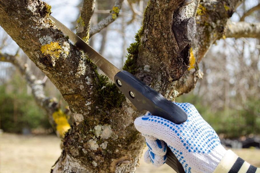 Elaguer un arbre