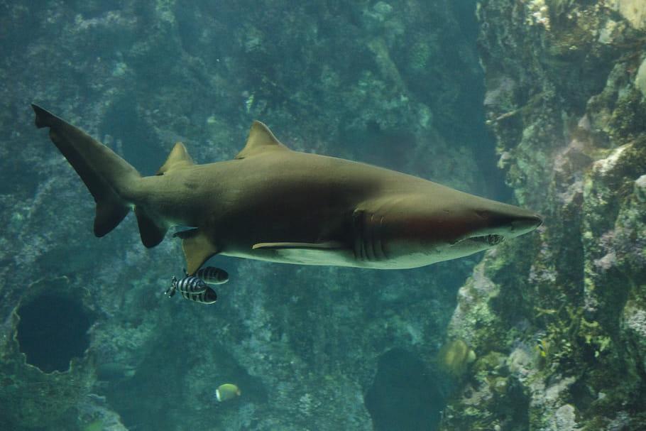 Océanopolis: un centre culturel dédié aux animaux marins