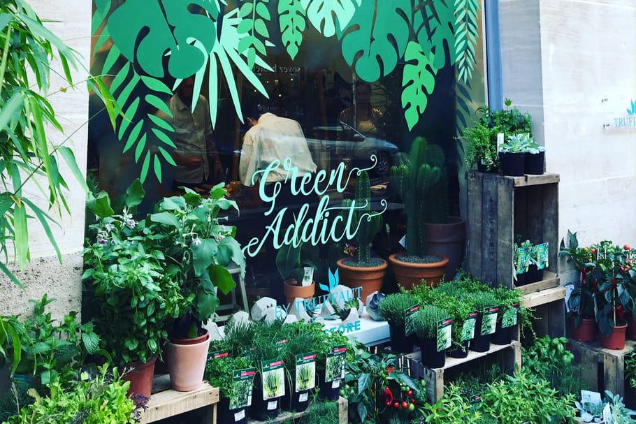 Truffaut installe un pop-up store dédié aux plantes d'intérieur à Paris