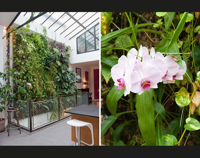 Un mur végétal fait maison