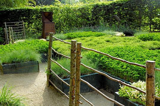 Le jardin Le chou Romanesco et la fougère
