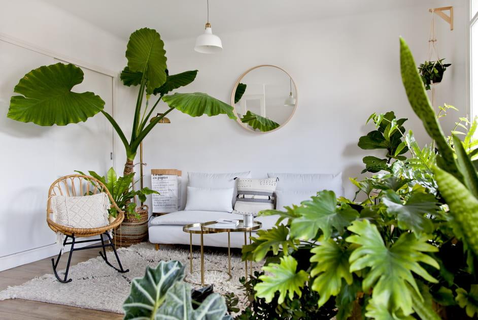 Faire le plein de plantes d'intérieur