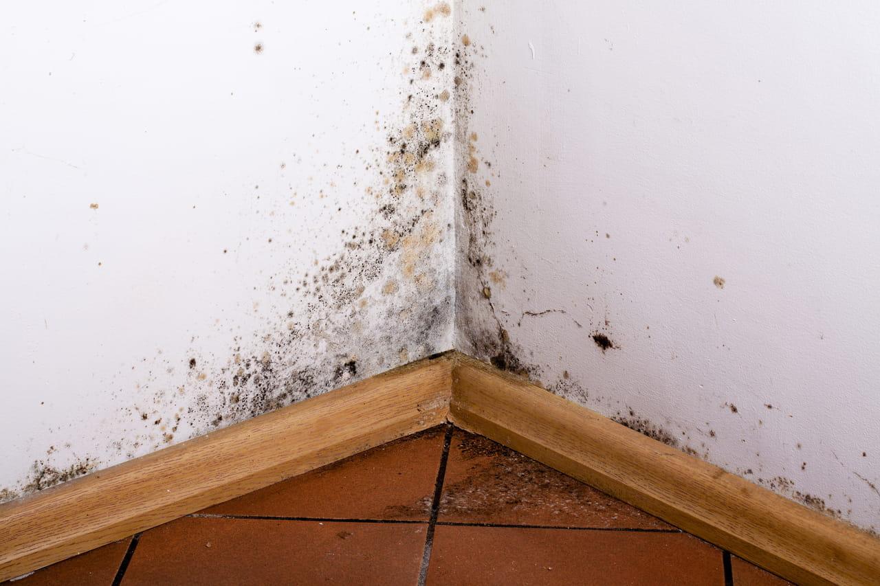Comment Enlever Des Taches De Moisissure Sur Un Mur en ce qui concerne comment enlever la moisissure ?
