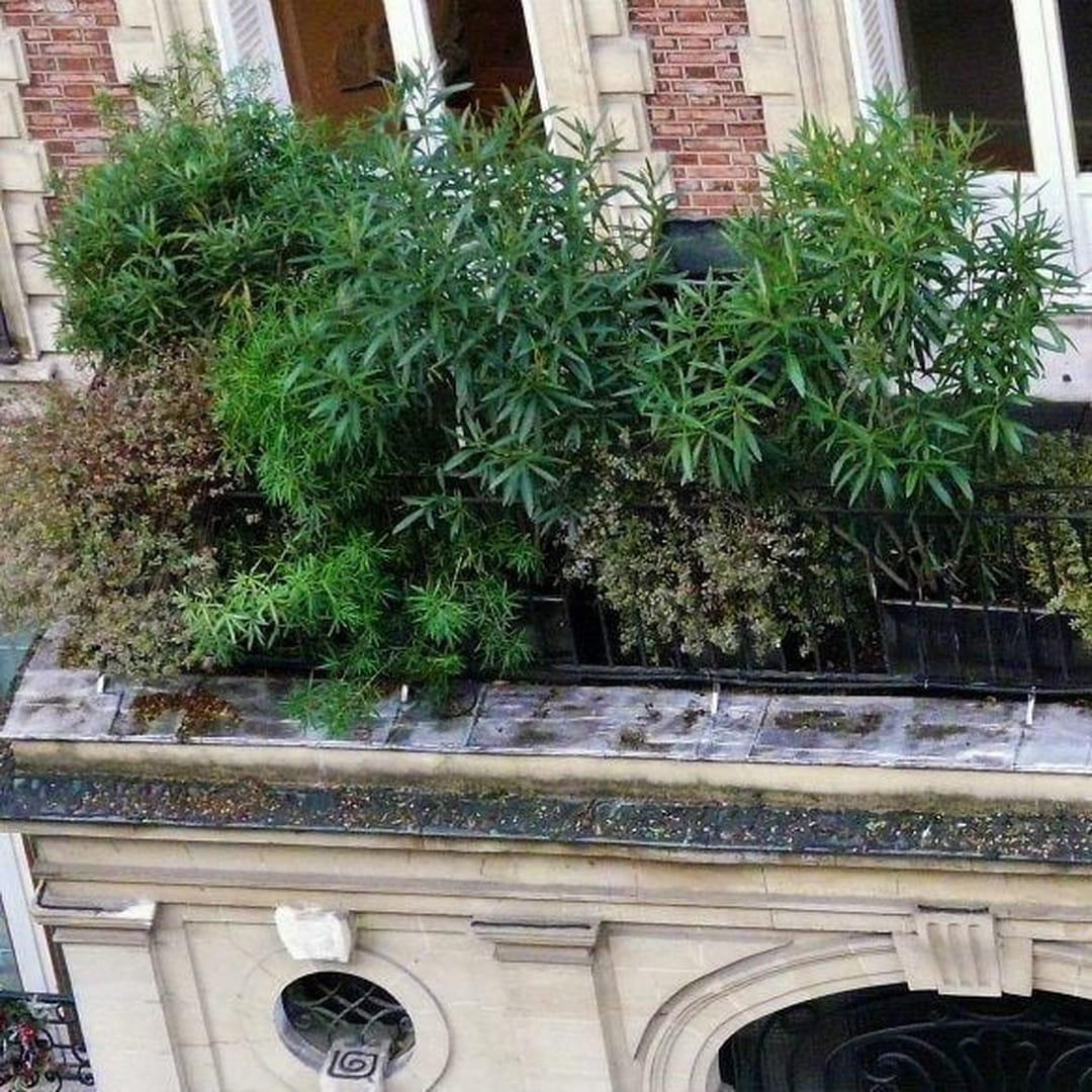 Arbuste Persistant Pour Pot en ville, comment avoir un balcon ou une terrasse bien verts ?