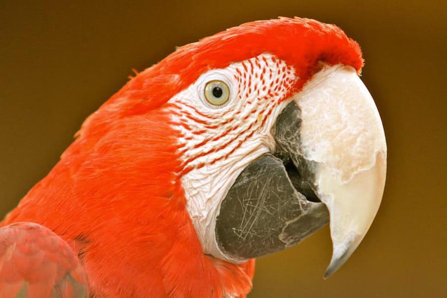Tropical Parc : descriptif et infos pratiques