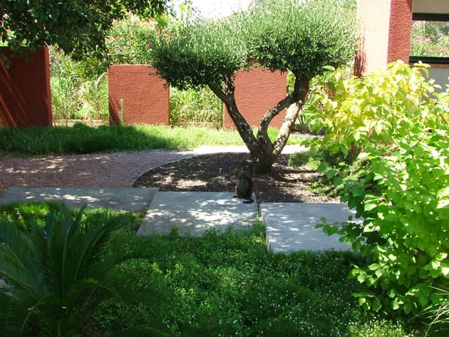 L 39 olivier taill en nuages - Jardin taille olivier ...