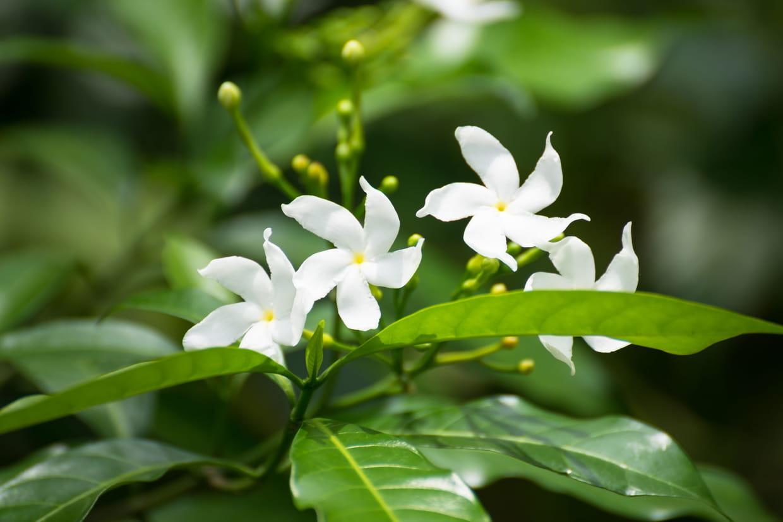 Plante A Planter En Septembre 15 fleurs parfumées pour le jardin
