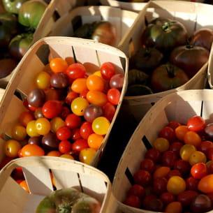 cultiver des tomates sur un balcon. Black Bedroom Furniture Sets. Home Design Ideas