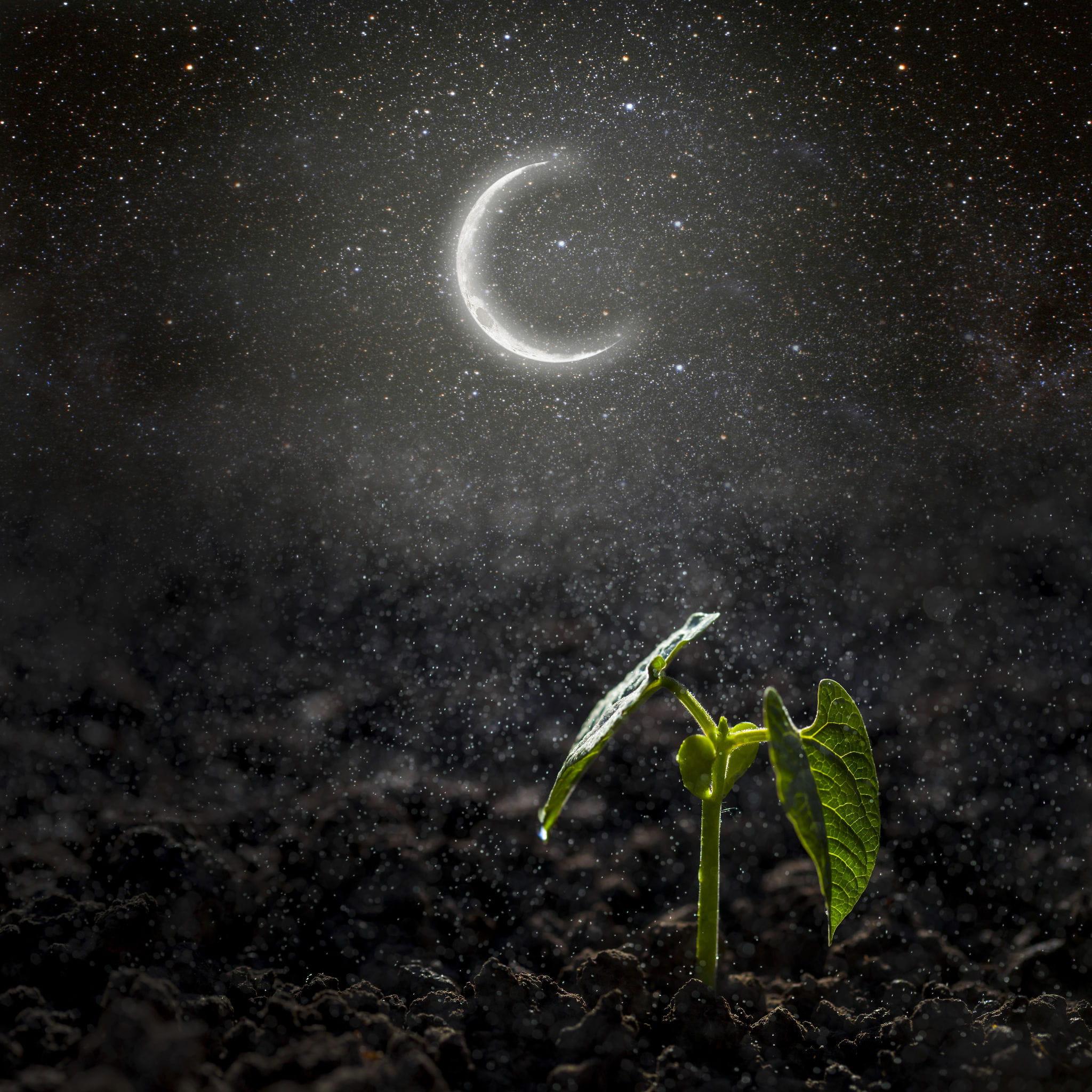 разорения новолуние картинки с природой есть, нужно прожить