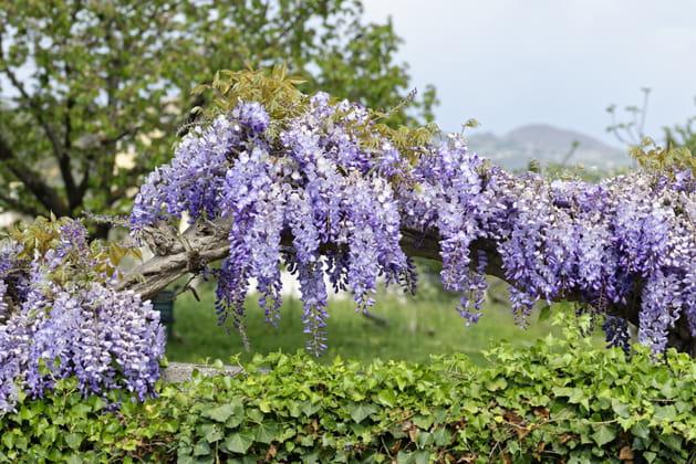 Ces plantes qui vont vous protéger du vis-à-vis