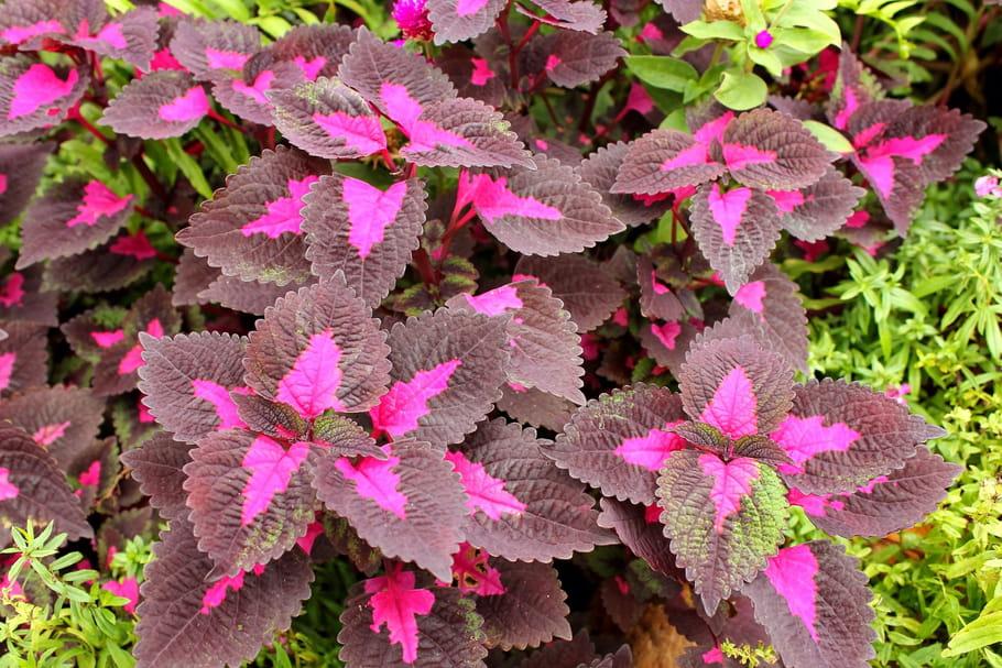 10plantes au feuillage insolite