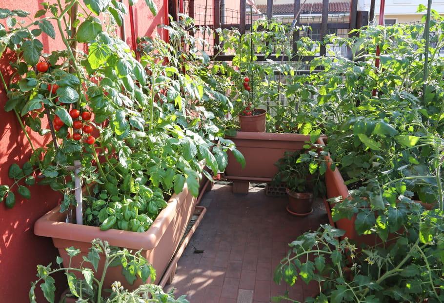 8 l gumes cultiver sur son balcon - Jardiner sur son balcon ...