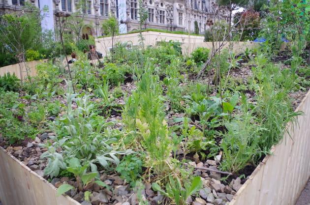 Jardin Le Petit Agent Vert