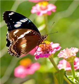 les papillons sont beaux mais pour certaines personnes très effrayants.