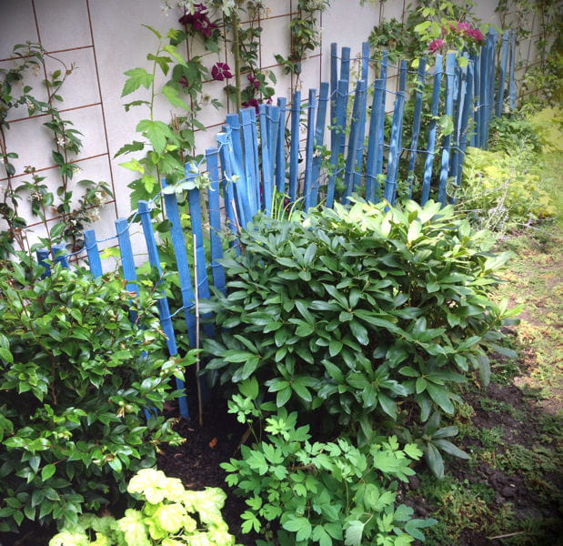 Un mini jardin de ville comme un nid douillet for Jardin anglais vegetaux