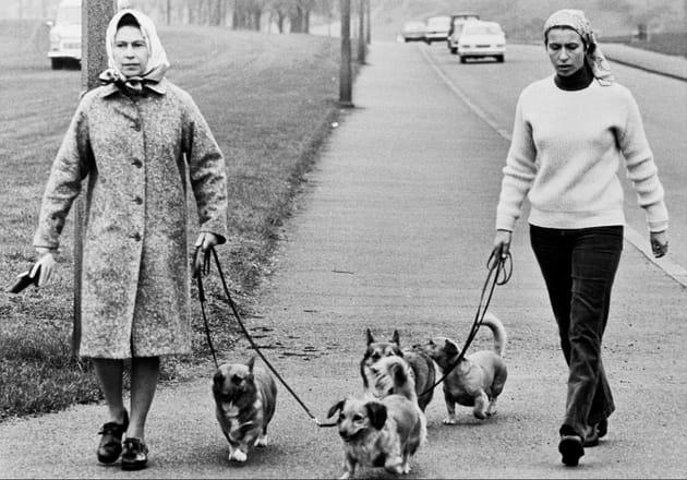 En promenade avec les chiens