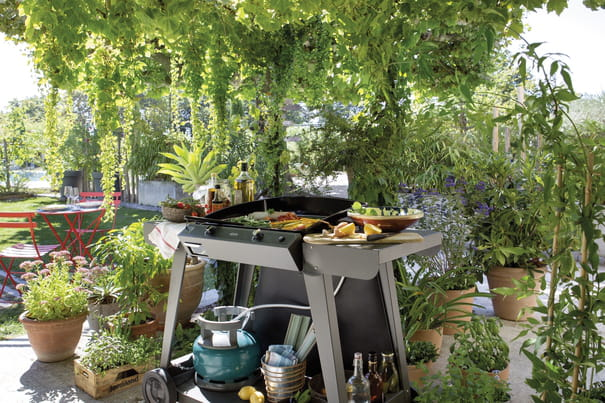 jardin   conseil pour le jardinage  l u0026 39 am u00e9nagement et la