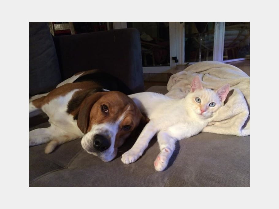 Noémie Honiat, comme chien et chat ?