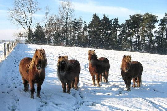 Un poney rustique