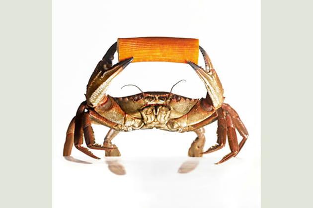 Crabe par Christophe Doucet