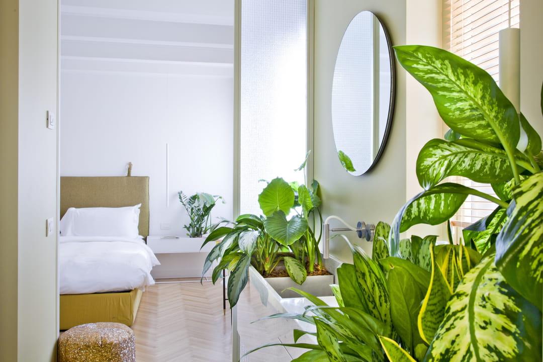 salle-de-bain-plante