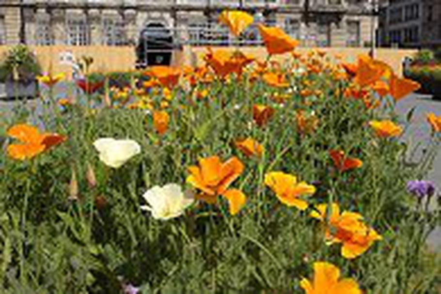 Une prairie fleurie en plein centre de Troyes