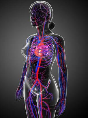 le système sanguin contient des veines, des artères et des capillaires.