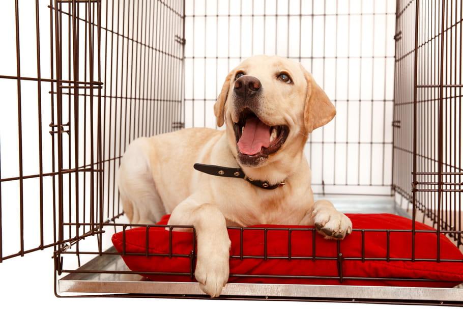 Les meilleures cages pour chiens: notre sélection